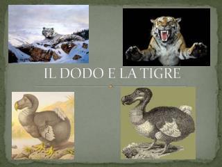 IL DODO E LA TIGRE