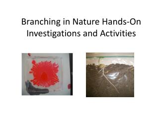 Branching in Nature Hands-On Investigations and  Activities