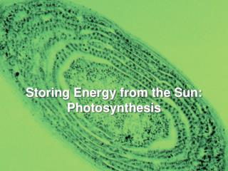 Storing Energy from the Sun: Photosynthesis