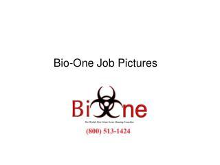job pics 1