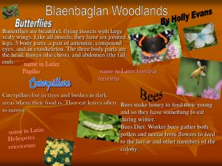 Blaenbaglan Woodlands