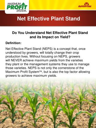 Do You Understand Net Effective Plant Stand  and its Impact on Yield? Definition: