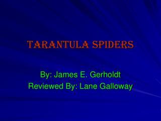 Tarantula Spiders