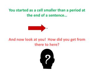 You started as a cell smaller than a period at the end of a sentence… .