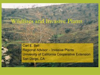 Wildfires and Invasive Plants