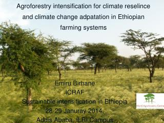 Emiru Birhane ICRAF Sustainable intensification in Ethiopia 28-29 Januray 2014 ,