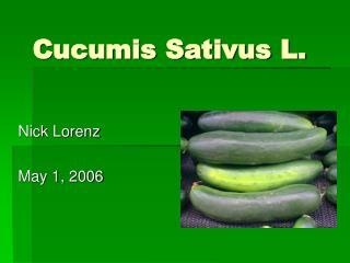 Cucumis Sativus L.