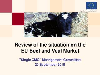 Review of the situation on the  EU Beef and Veal Market