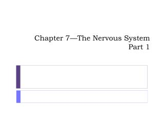 Chapter 7—The Nervous System Part 1