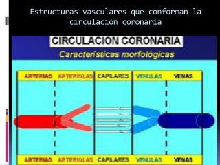Estructuras vasculares que conforman la circulación coronaria