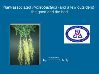 Plant-associated Proteobacteria and a few outsiders:  the good and the bad