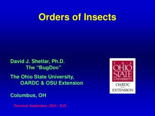 Orders of Insects