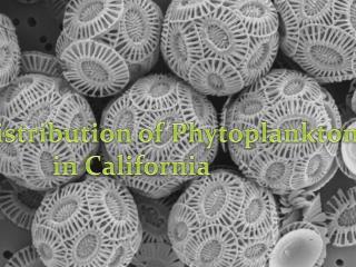 Phytoplankton Distribution