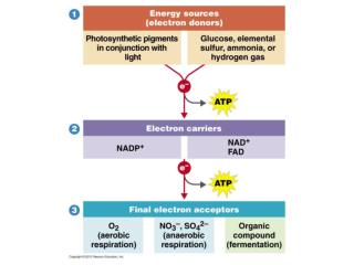 Phototrophy  Conversion of radiant energy from the sun into ATP and NADPH