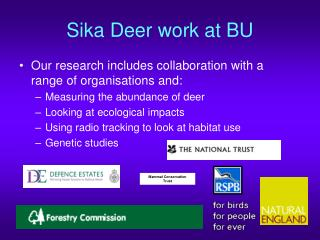Sika Deer work at BU