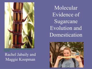 Molecular Evidence of Sugarcane Evolution and Domestication