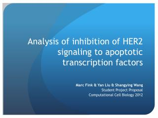Analysis of  inhibition of HER2  signaling to apoptotic transcription factors