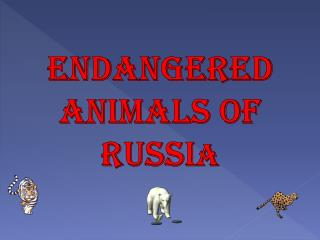 Endangered  Animals of Russi a