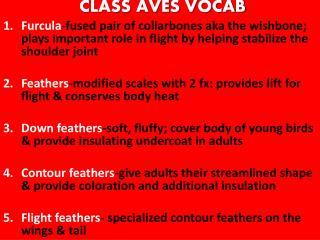CLASS AVES VOCAB