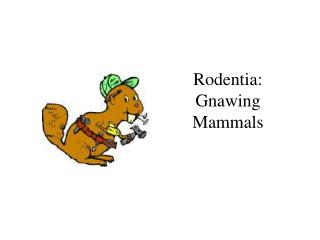 Rodentia:  Gnawing Mammals