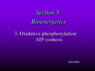Section 5:  Bioenergetics