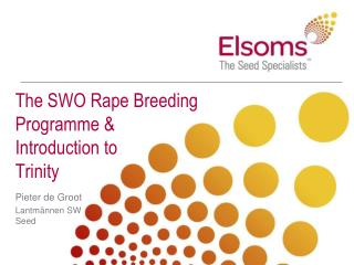 The SWO Rape Breeding Programme & Introduction to Trinity