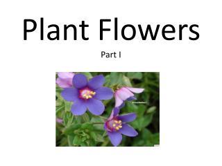 Plant Flowers Part I