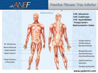 Practica Fitness: Tren Inferior