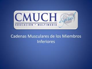 Cadenas Musculares de los Miembros Inferiores