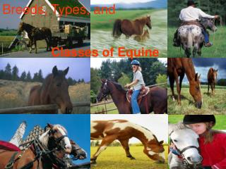 Breeds, Types, and