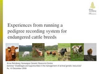 Experiences from running a pedigree recording system for endangered cattle breeds