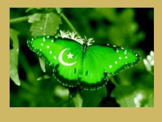 PowerPoint presentation  Prepared by: Karwan Ali
