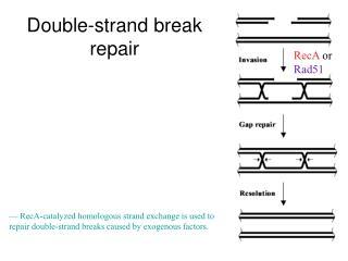 Double-strand break repair