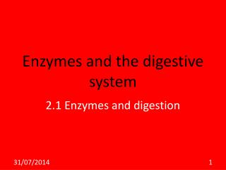 Enzymes and the digestive system