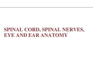 Spinal Nerves: Roots