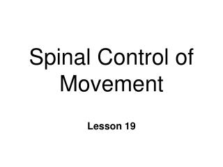 Spinal Control of Movement