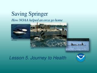 Saving Springer How NOAA helped an orca go home