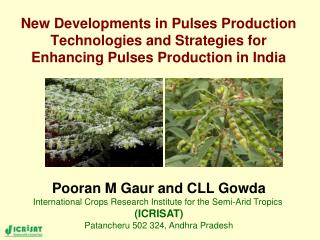 New Developments in Pulses Production Technologies and Strategies for Enhancing Pulses Production in India