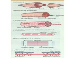 anatomy 10