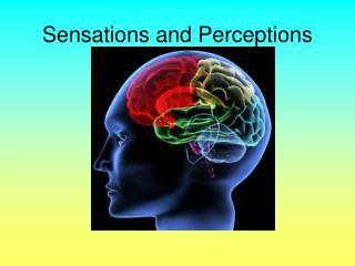 Sensations and Perceptions
