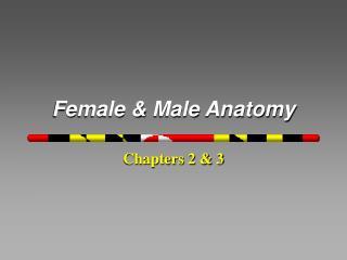 Female & Male Anatomy