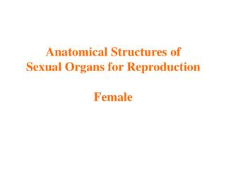 Anatomical Structures of  Sexual Organs for Reproduction Female