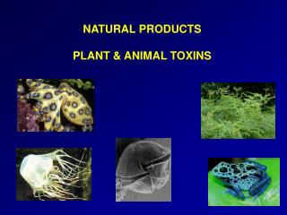 NATURAL PRODUCTS PLANT & ANIMAL TOXINS