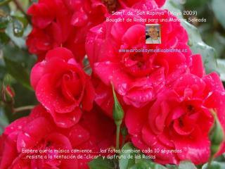 """Santi…de """"Son Rapinya"""" (Mayo 2009)   Bouquet de Rosas para una Mañana Soleada"""
