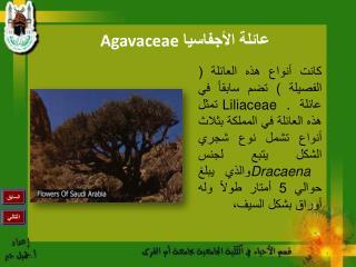 عائلة الأجفاسيا  Agavaceae