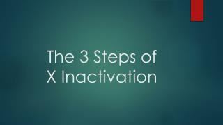 The 3 Steps of  X Inactivation