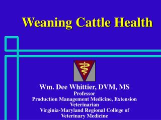 Weaning Cattle Health