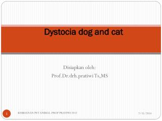 Dystocia dog and cat