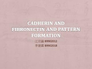Cadherin and  Fibronectin  and pattern formation