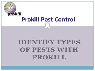 Identify Types of Pests with the Prokill Experts